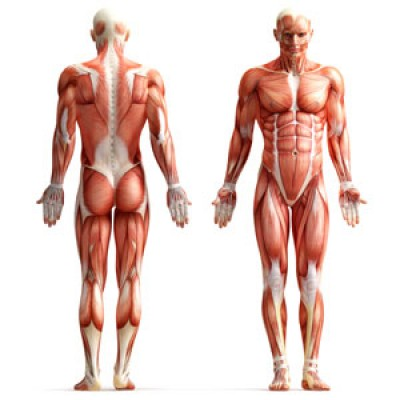 The Human Body – A Perspective – HMMR Media